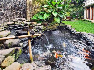 Cara Membuat Kolam Ikan Koi Yang Murah Dan Sederhana